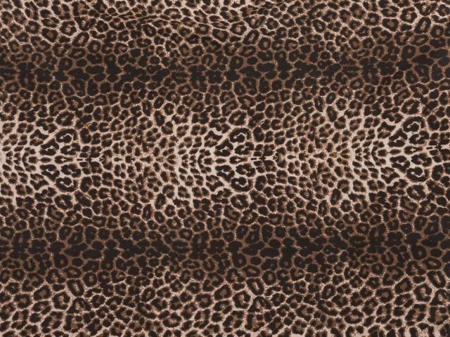 Tekikott Leopard
